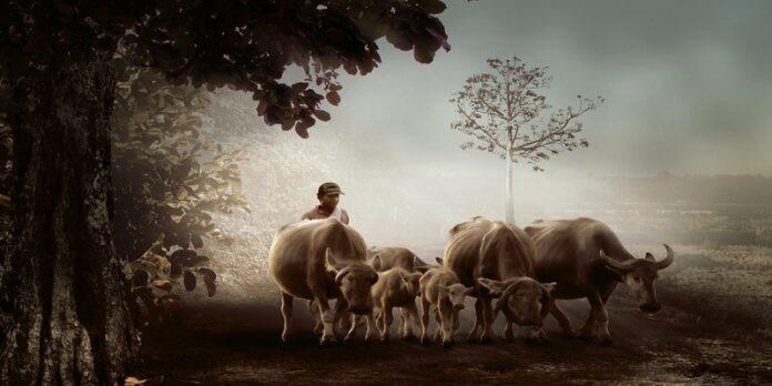किसान
