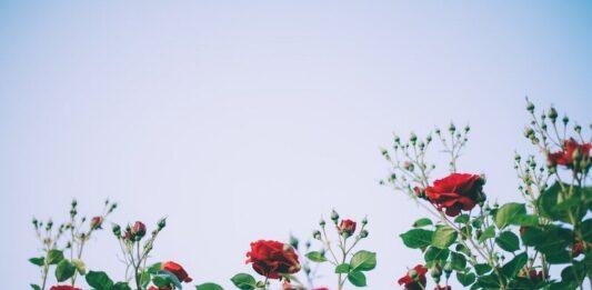 वादियों में गुलाब ढूंढ़ू मैं