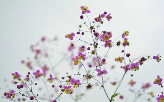 फूलों का रंग रखिए,बरकरार हमेशा